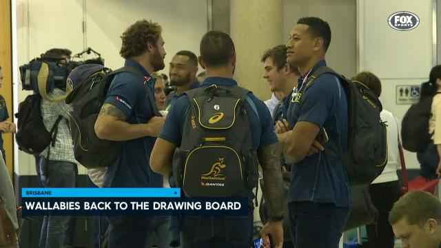 What will Cheika do now?