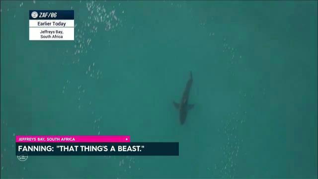 Fanning in shark drama again